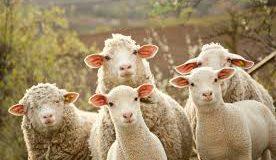Yo doy la vida eterna a mis ovejas